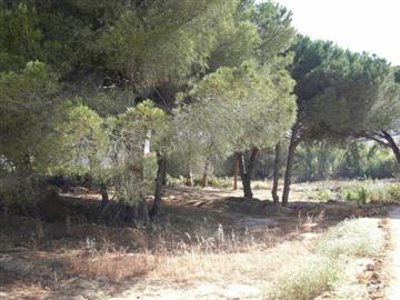 Loulé, Quarteira