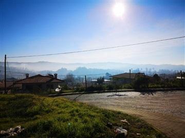 Lote / Braga, Tadim