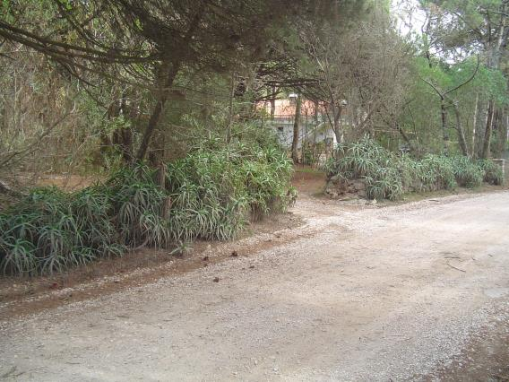 Plot / Sintra, Colares