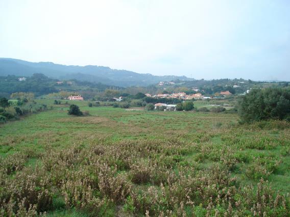Plot / Sintra, Nafarros