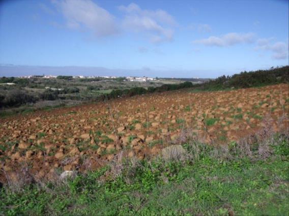 Plot / Sintra, Odrinhas Santa Susana