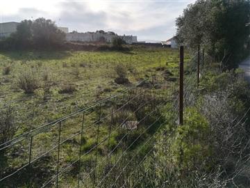 Terrain à bâtir / Sintra, Pero Pinheiro