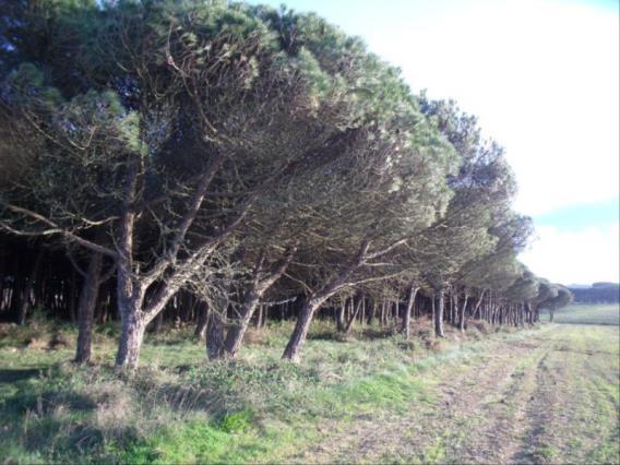 Terrain / Sintra, Fachada