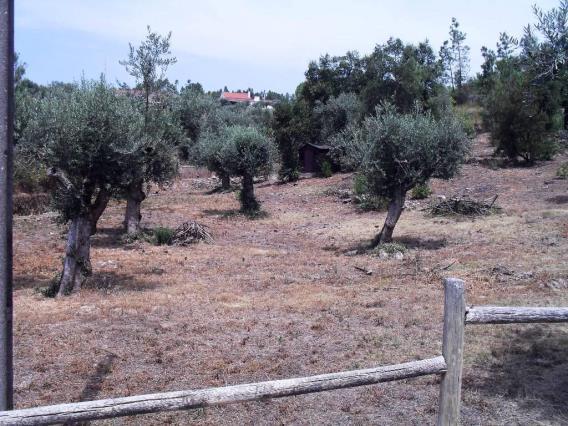 Terrain / Tomar, 1118-SERRA