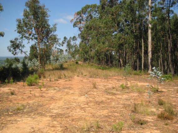 Terreno / Águeda, Cabanões