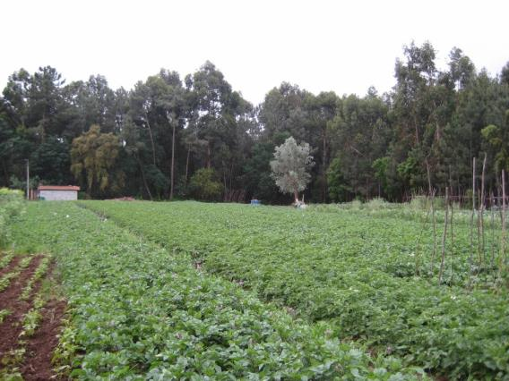 Terreno / Águeda, Recardães e Espinhel