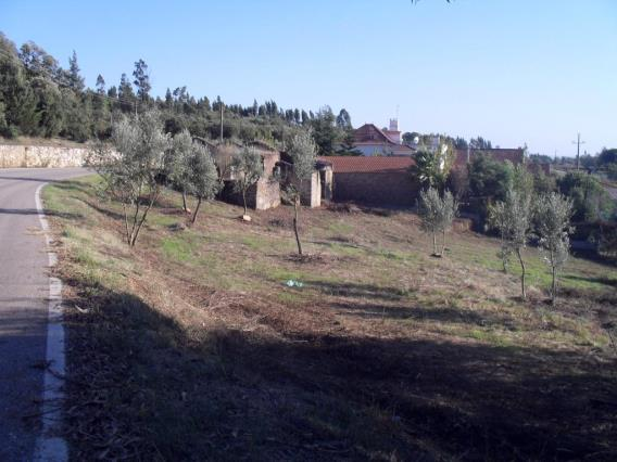 Terreno com ruina / Tomar, 1109-ALVIOBEIRA