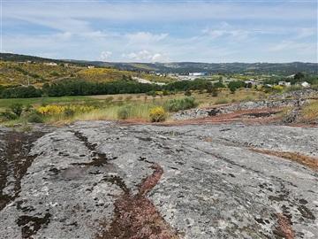 Terreno / Moimenta da Beira, Leomil