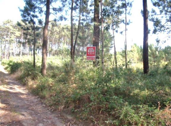 Terreno Para Construção / Leiria, 28 - Maceira Centro Vale da Gunha , Telheiro