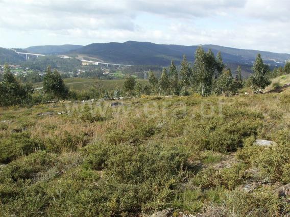 Terreno Para Construção / Paredes, Casconha