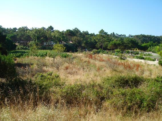 Terreno Para Construção / Sintra, Colares