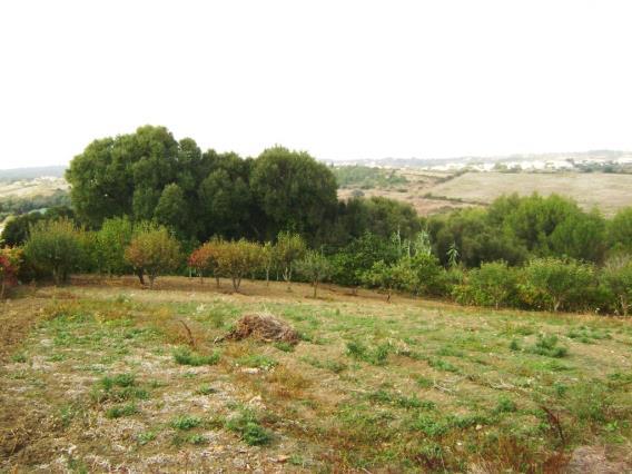 Terreno Para Construção / Sintra, Galamares