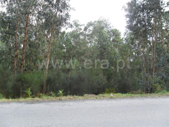 Terreno / Paredes, Quinta dos Bambus