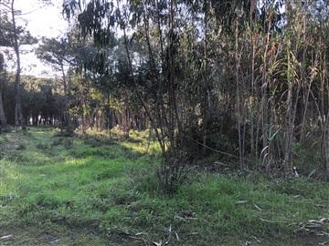 Terreno / Sintra, Janas