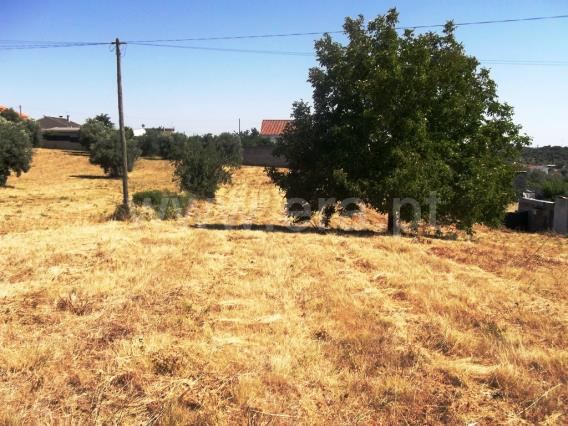 Terreno / Tomar, 1008-TOMAR