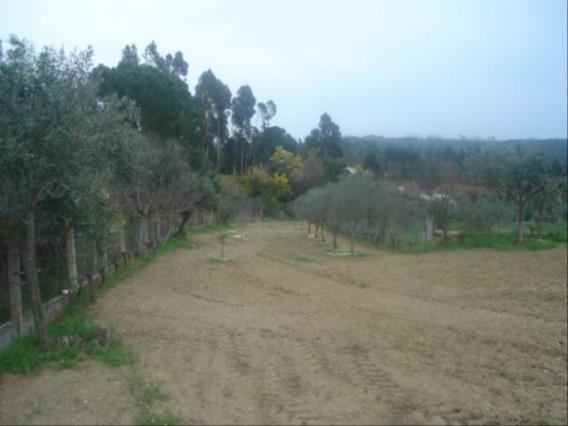 Terreno / Tomar, 1119-CASAIS