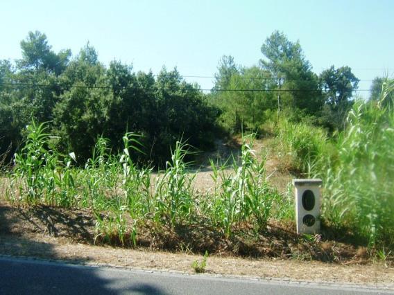 Terreno / Tomar, Madalena e Beselga